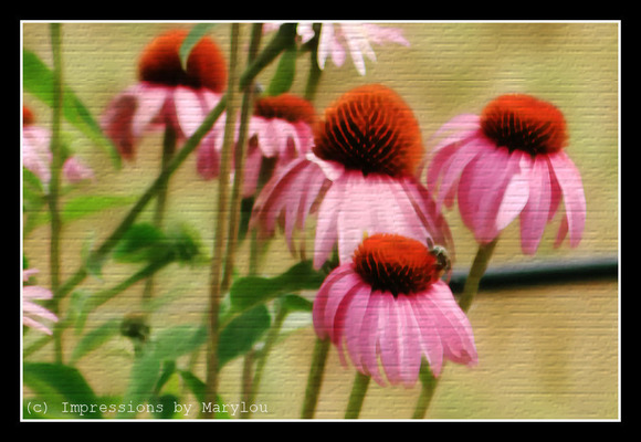 Painted Cone Flowers 100.jpg